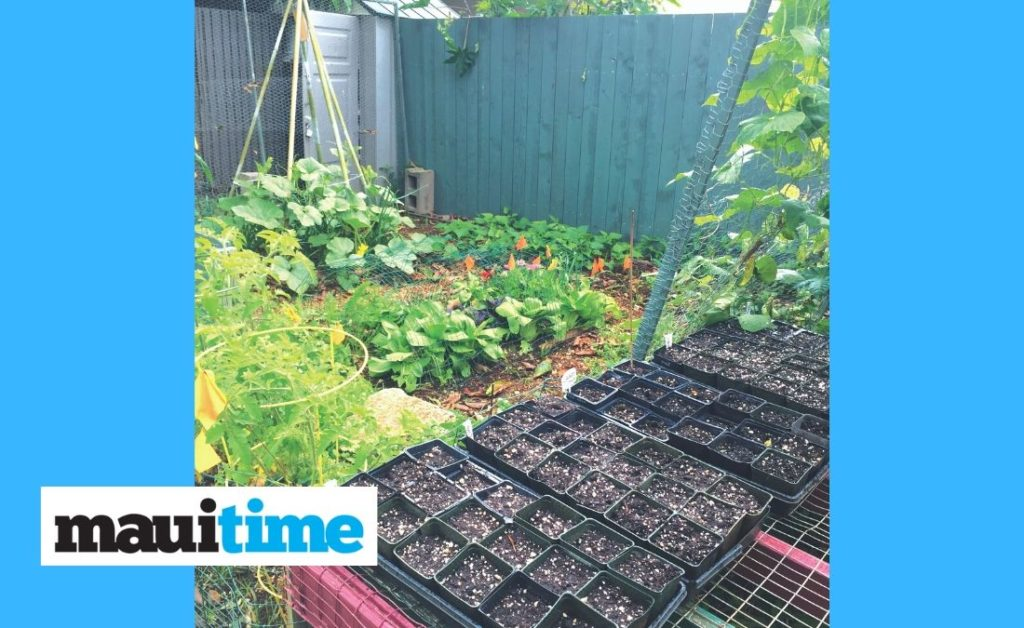 Growing Hope During A Pandemic Gardening Takes On New Meaning